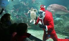 Γιορτινές εκπλήξεις στους μικρούς φίλους του Θαλασσόκοσμου!!!