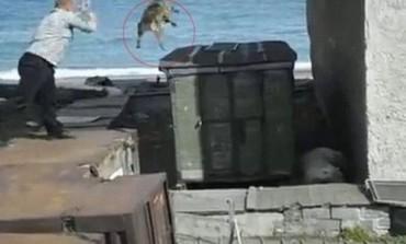 Φρίκη: Πετάει ζωντανό σκύλο για πλάκα στα δόντια πολικής αρκούδας