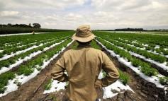 Ασφαλιστικό: Τι θα ισχύσει για τους αγρότες και ελεύθερους επαγγελματίες