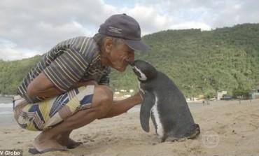 Πιγκουίνος ταξιδεύει κάθε χρόνο στη Βραζιλία για να δει τον ψαρά που τον έσωσε