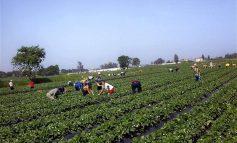 Ποιο αγρότες συνταξιούχοι κινδυνεύουν να χάσουν την σύνταξη