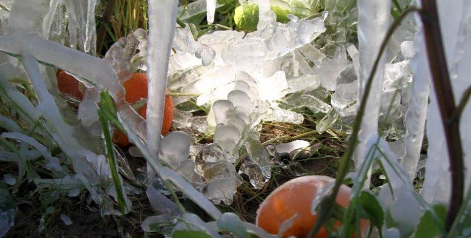 Ζημιές σε καλλιέργειες και αμπέλια από τo χιόνι στην Κρήτη – Ξεκίνησε την καταγραφή ο ΕΛΓΑ