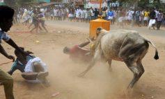 Δύο νεκροί και 28 τραυματίες σε φεστιβάλ ταυρομαχίας στην Ινδία