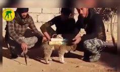 Απίστευτο βίντεο: Τζιχαντιστές εκπαιδεύουν σκύλους για βομβιστές αυτοκτονίας