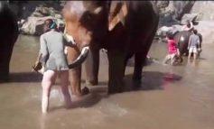 Τουρίστρια πήγε να χαϊδέψει ελέφαντα και... την εκσφενδόνισε!