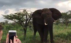 O ελέφαντας τσατίστηκε και τους πετούσε ξύλα!