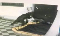 Σοκαριστικό βίντεο: Έκαψε ζωντανό άστεγο την ώρα που κοιμόταν!