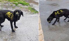 Οργή – Έβαψαν σκύλο με σπρέι σε χρώματα ομάδας