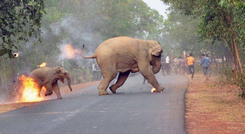 Η φωτογραφία μικρού ελέφαντα που καίγεται κέρδισε βραβείο