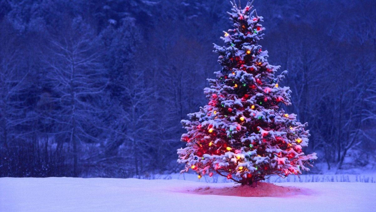 """a7c8bc76700c Το Χριστουγεννιάτικο δέντρο και η """"καταγωγή"""" του"""