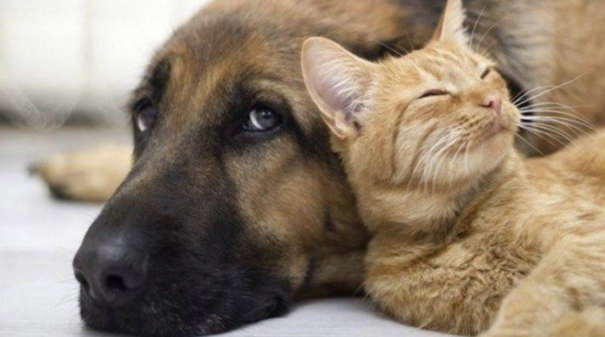 σκύλος με γάτα