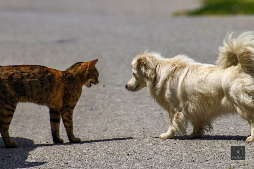 Σαν το σκύλο με τη γάτα!