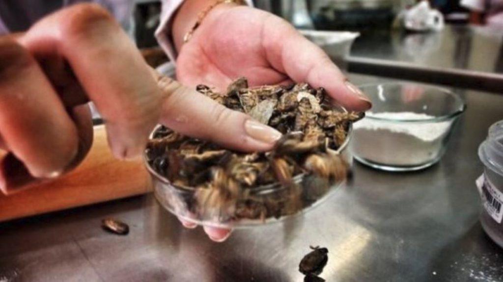 Απίστευτο: Έφτιαξαν ψωμί με αλεύρι από … κατσαρίδες!