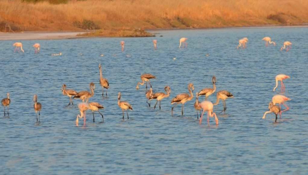 πουλιά στη λίμνη