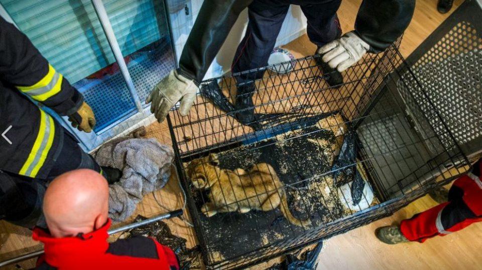 Προσπάθησαν να πουλήσουν λιονταράκι στο Παρίσι για 10.000 ευρώ