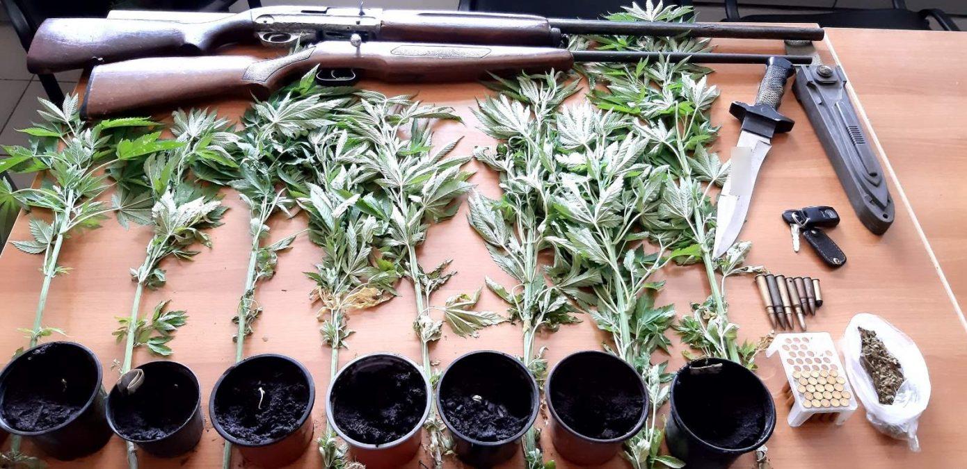 Δενδρύλλια κάνναβης – όπλα – ναρκωτικά